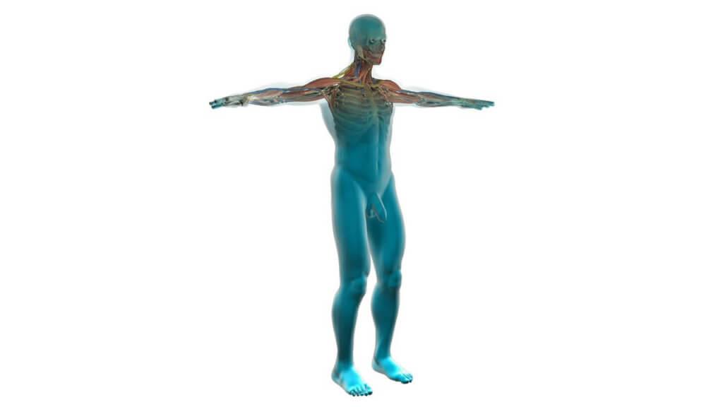 Vorteile Vibrationsplatte Gesund und Fit leben Kreislauf